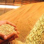 IBGE registra aumento na produção de grãos em Sergipe