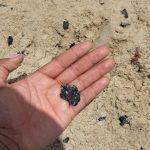 Pescadores encontram mais peixes mortos com manchas de óleo em Socorro