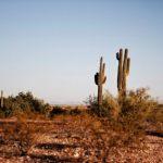 Aprovado PL que cria Conselho Permanente à Desertificação